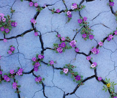 flowers-cracks